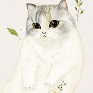 pepe lovely cat